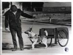 """di00610 - Ronald Lewis (35) out training his dog """"Trouble"""" ..."""